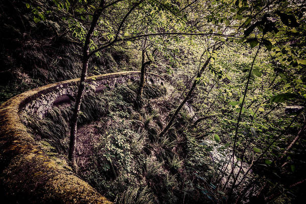 Photograph - Forest Wonderland by Wes and Dotty Weber