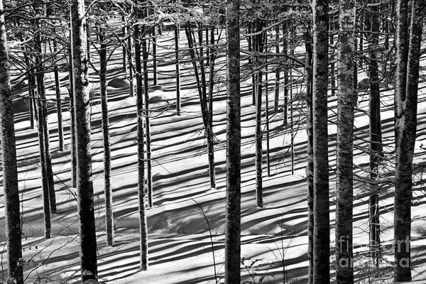Wall Art - Photograph - Forest's Shadows by Yuri San