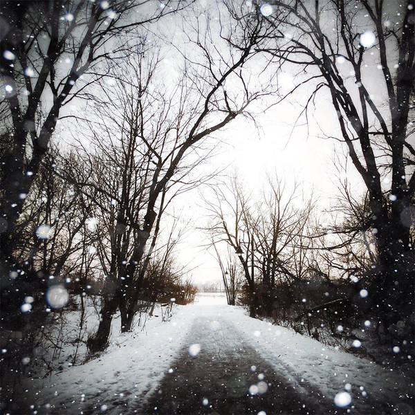Photograph - Foret D'hiver by Natasha Marco