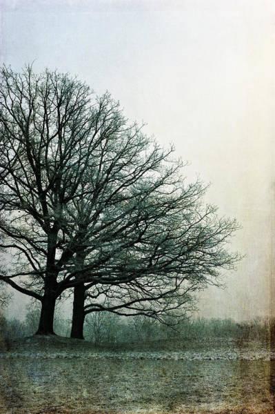 Photograph - Forever Standing by Randi Grace Nilsberg