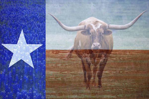 Steer Photograph - Forever Texas by Paul Huchton