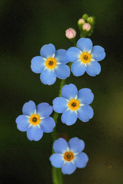 Painting - Forget Me Not 001  by Dean Wittle