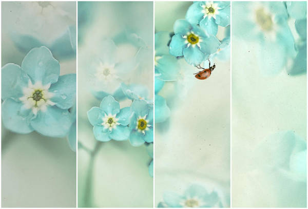 Wall Art - Photograph - Forget Me Not..... by Ellen Van Deelen