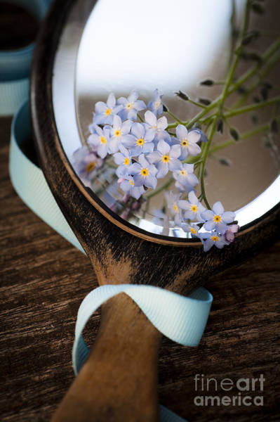 Forget Me Not Photograph - Forget Me Not by Jan Bickerton