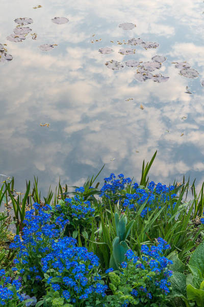 Claude Monet Photograph - Forget-me-nots And Pond by Michael Lustbader