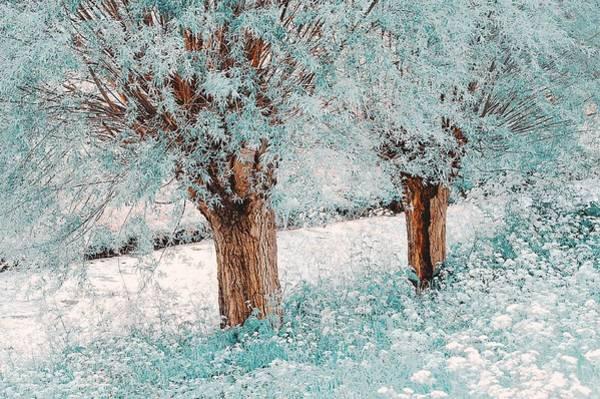 Photograph - Forgotten Dreams. Nature In Alien Skin by Jenny Rainbow