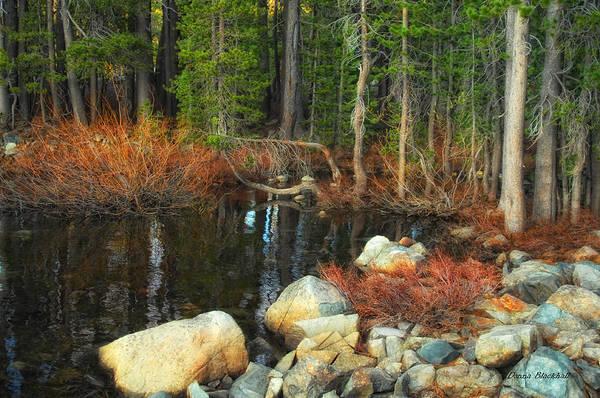 Wall Art - Photograph - Forgotten Forest by Donna Blackhall