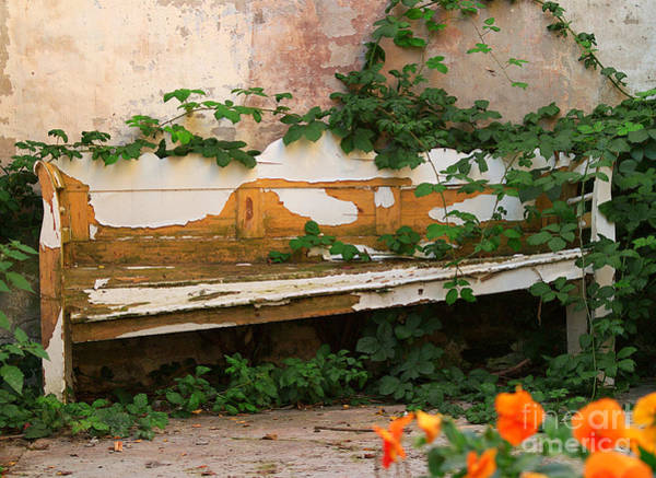 Photograph - The Forgotten Garden by Luc Van de Steeg