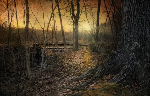 Photograph - Forgotten Path by Robin-Lee Vieira
