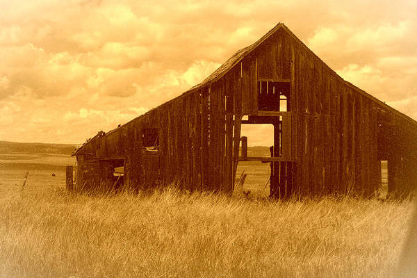 Photograph - Forgotten by Terry Holliday