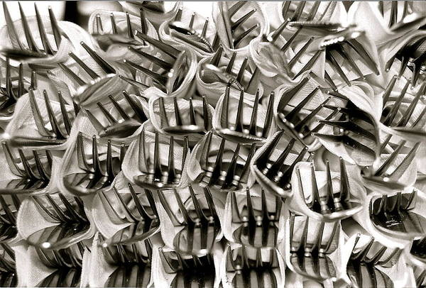 Photograph - Forks by Kim Pippinger