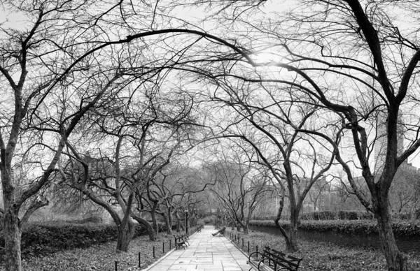 Photograph - Formal Gardens Pano by Dave Beckerman