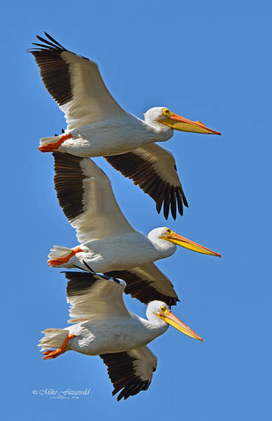 Pelican Island National Wildlife Refuge Wall Art - Photograph - Formation by Mike Fitzgerald