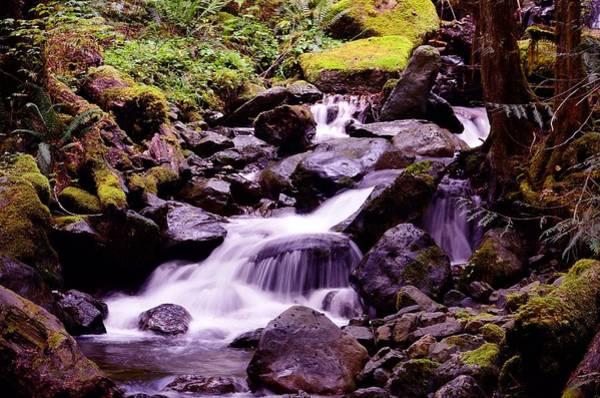 Ivanhoe Photograph - Forrest Stream by Todd Sarah Ivanhoe