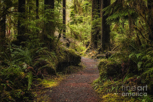 Rain Forest Photograph - Forest Walk  by Jennifer Magallon