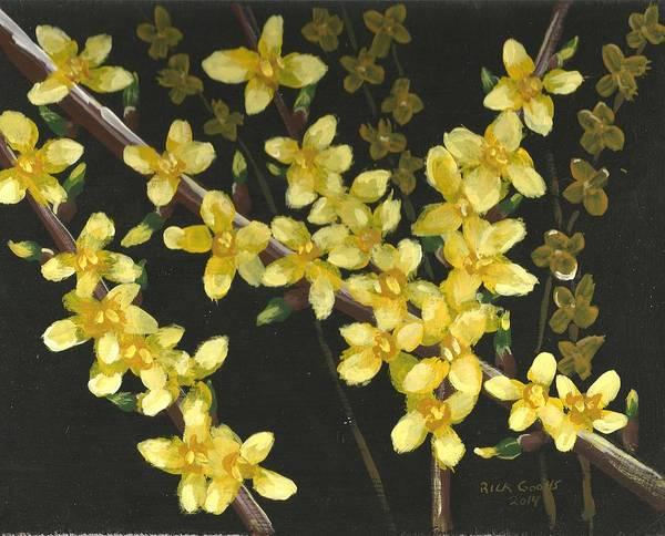 Forsythia Painting - Forsythia Blooms by Richard Goohs