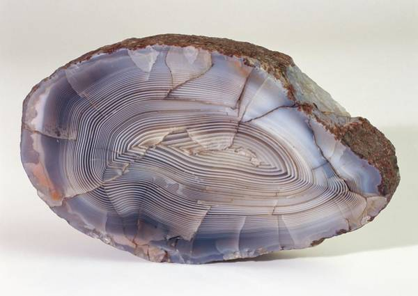 Fortification Photograph - Fortification Agate by Dorling Kindersley/uig