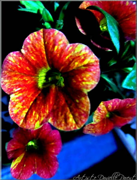Photograph - Fortinos Petunias by Danielle  Parent