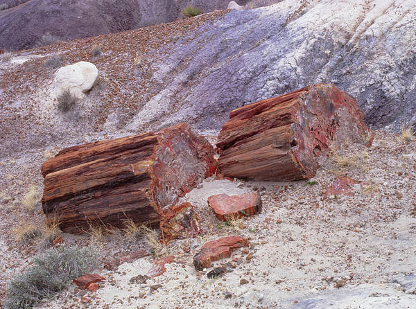 Fossilised Trees In Petrified Forest National Park Art Print