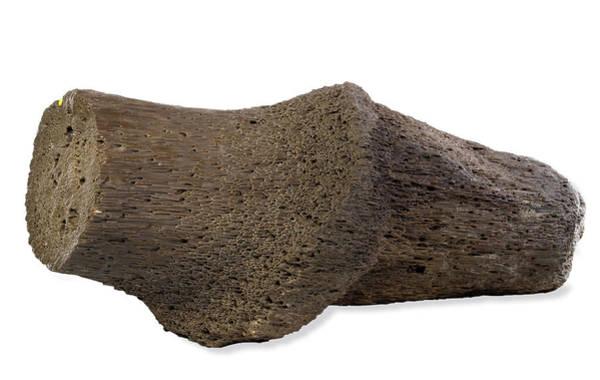Fossilised Wood Art Print