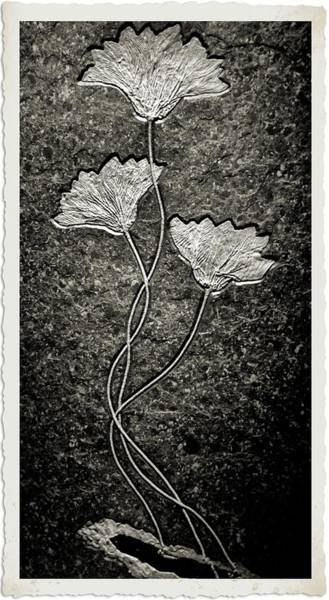 Wall Art - Photograph - Fossilized Flowers by Dan Sproul