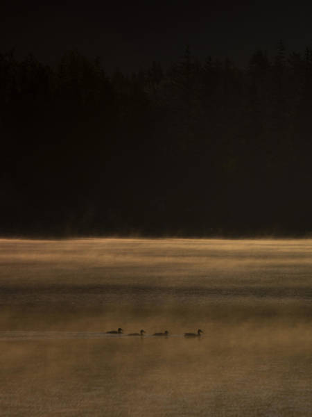 Duck Hunt Photograph - Four Ducks by Aaron Bedell