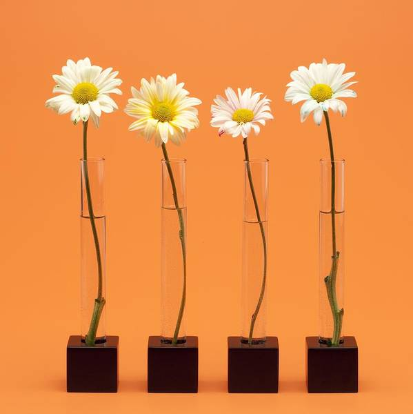 Flowers In A Vase Photograph - Four Flowers by Ron Nickel