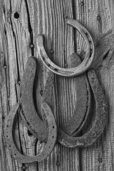White Horse Photograph - Four Horseshoes by Garry Gay