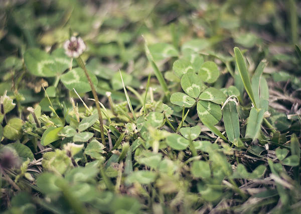Four Leaf Clover Photograph - Four Leaf Clover by Heather Applegate