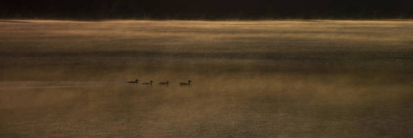Duck Hunt Photograph - Four O Duck In The Morning by Aaron Bedell