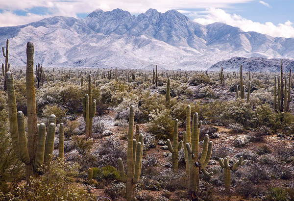 Photograph - Four Peaks Snowstorm by Dave Dilli