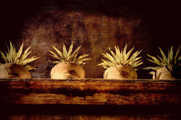 Wall Art - Photograph - Four Potted Plants by Carol Leigh
