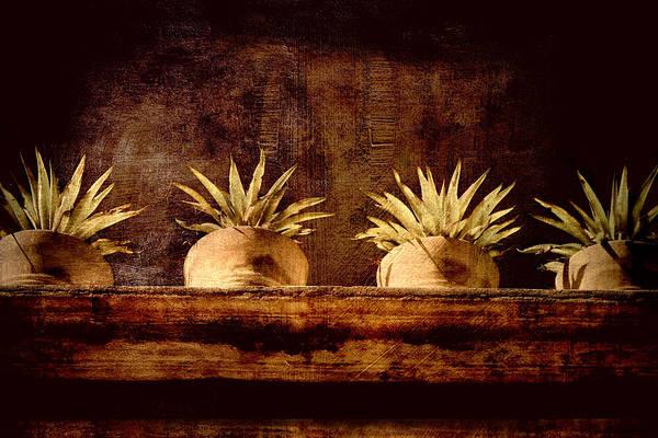 San Miguel De Allende Photograph - Four Potted Plants by Carol Leigh