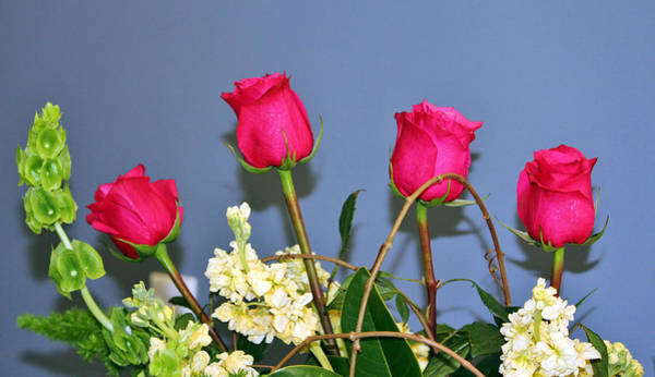 Photograph - Four Roses by Cynthia Guinn