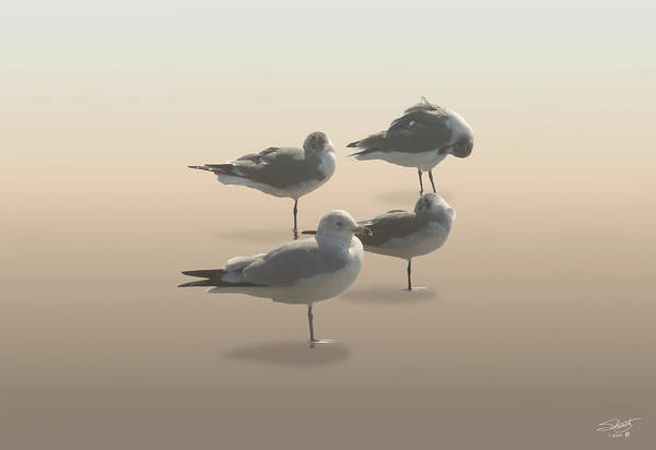 Seagull Digital Art - Four Seagulls On Sand Key by M Spadecaller