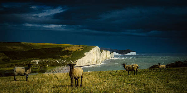 Photograph - Four Sheep And Seven Sisters by Chris Lord