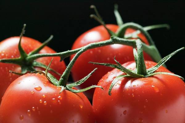 Vegies Photograph - Four Tomatoes On The Vine With Drops Of Water (close-up) by Foodcollection