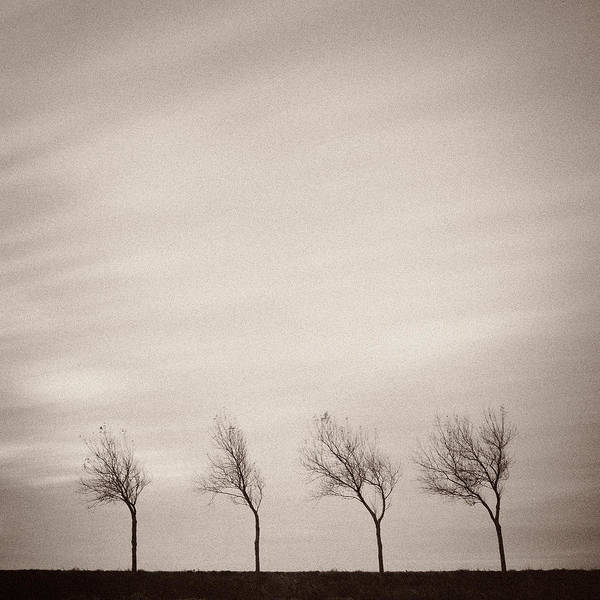 Leafless Tree Wall Art - Photograph - Four Trees by Dave Bowman