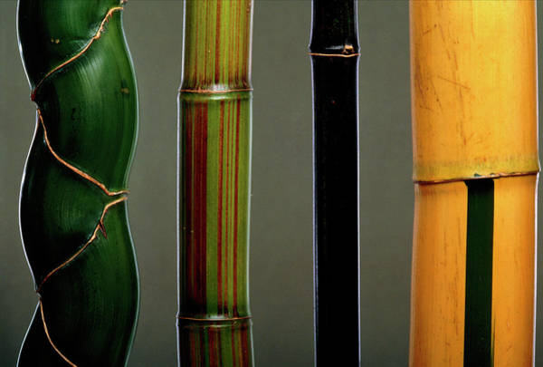 Bamboo Photograph - Four Types Of Bamboo by Pascal Goetgheluck/science Photo Library