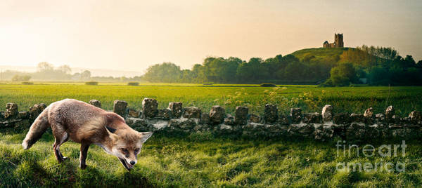 Somerset County Photograph - Fox Burrow Mump by Simon Plant