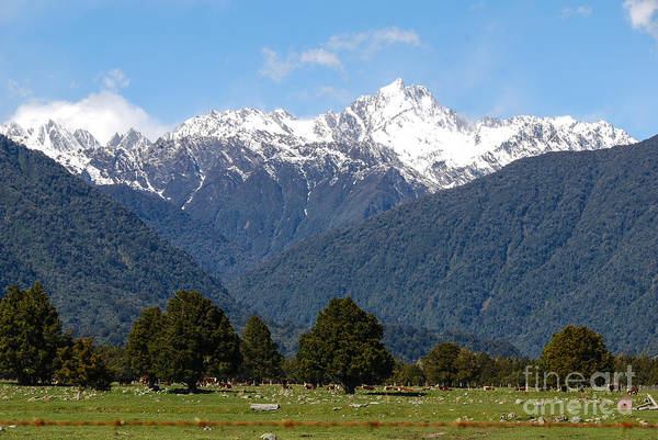Photograph - Fox Glacier Nz by Fran Woods