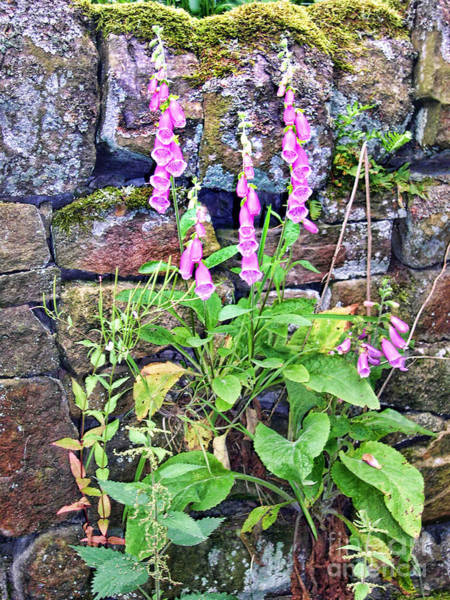 Photograph - Foxglove By An Old Wall by Brenda Kean