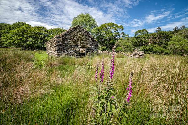 Coed Photograph - Foxglove Ruin by Adrian Evans