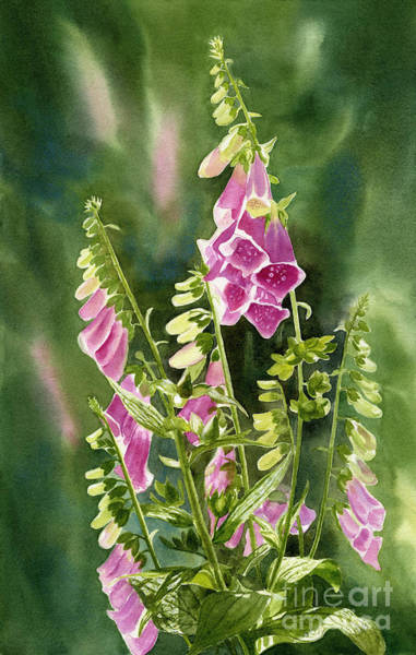 Perennial Painting - Foxgloves With Background by Sharon Freeman