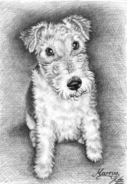 Hund Drawing - Foxterrier by Nicole Zeug