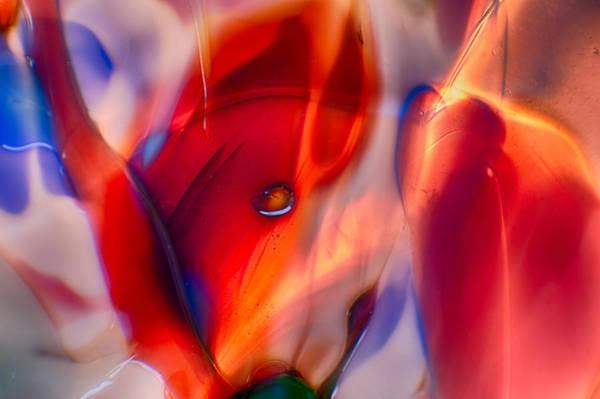 Photograph - Foxy Lady by Omaste Witkowski