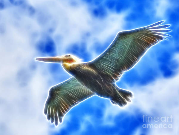 Photograph - Fractal Pelican Flight by Beth Sargent