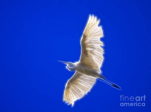 Photograph - Fractal White Egret by Beth Sargent