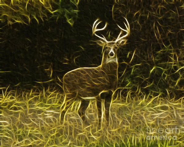 Photograph - Fractalius 8 Point Buck by Jim Lepard