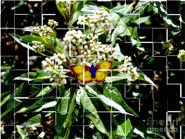 Flutterby Wall Art - Photograph - Fractured Flutterby by Al Bourassa